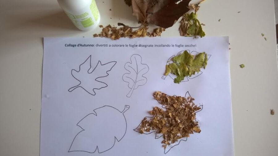 schede didattiche autunno collage foglie