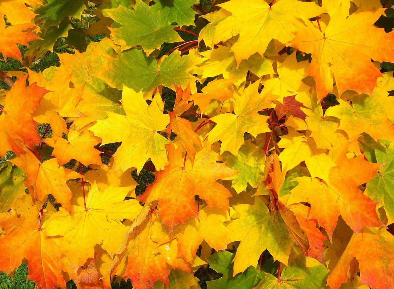 foglie collage per bambini
