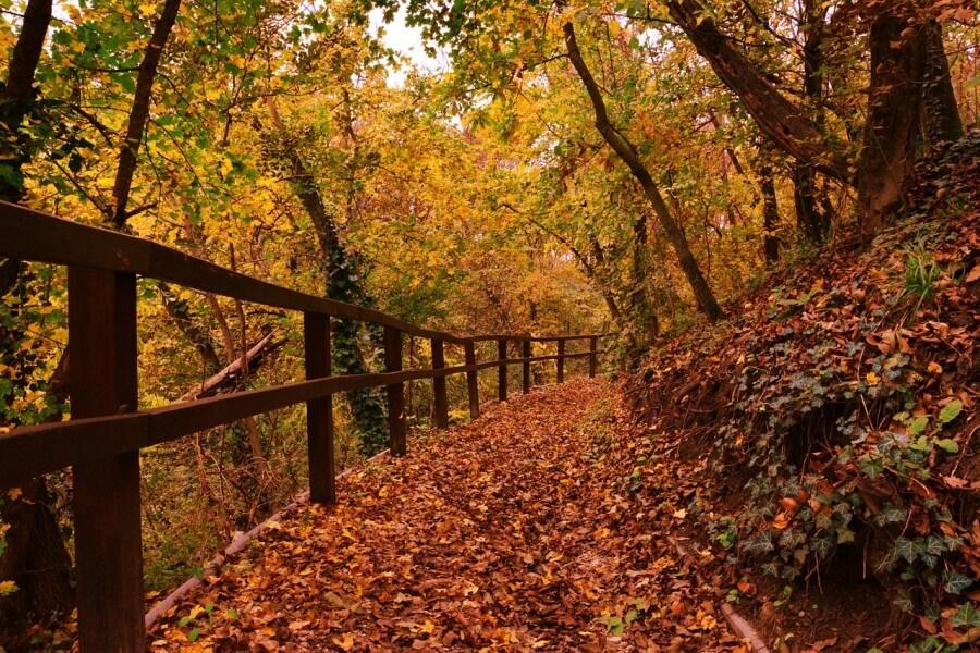 i colori dell'autunno, le foglie in autunno