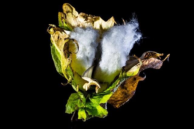 i materiali per fare una tela, il cotone