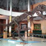 fossili e dinosauri in un museo