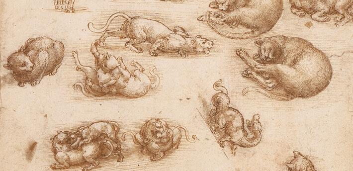 Leonardo da Vinci, Studio con gatti, 1513 circa. Credit: lavitaconunclick.altervista.org