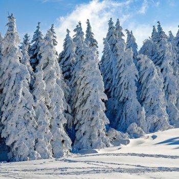 inverno e neve schede didattiche