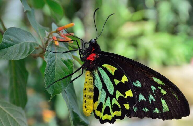 farfalla da disegnare per bambini