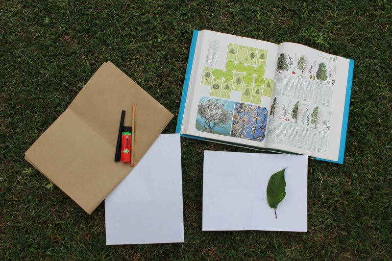 I materiali per costruire un'erbario con i bambini